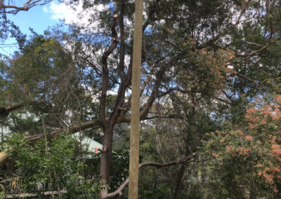 NEW TIMBER PRIVATE POLE – WARRAWEE